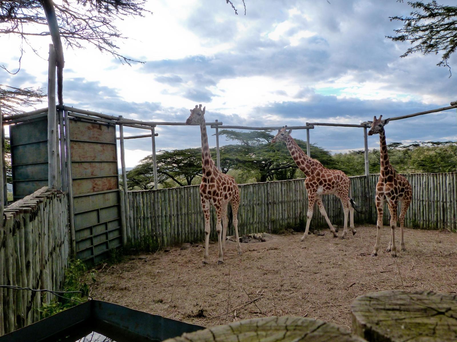 Koen B in Kenia